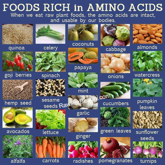 List Of Foods With All Essential Amino Acids
